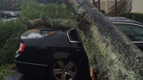 Photos: Severe weather knocks down trees in… - (8/11)