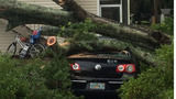 Photos: Severe weather knocks down trees in… - (4/11)