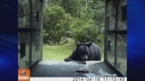 Photos: Bear captured on camera inside trap - (4/5)