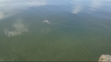 Photos: Shark caught in Brevard County pond - (2/5)