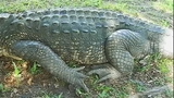Photos: Gator found in Brevard County park… - (1/6)
