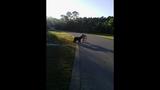 Photos: Man feeding bear in Seminole County - (6/8)