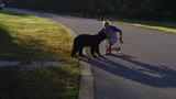 Photos: Man feeding bear in Seminole County - (4/8)