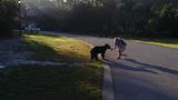 Photos: Man feeding bear in Seminole County - (2/8)