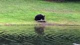 Photos: Man feeding bear in Seminole County - (8/8)