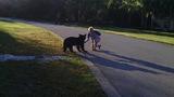 Photos: Man feeding bear in Seminole County - (7/8)