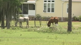 Photos: Complaint alleges horses at Horse… - (3/7)