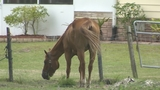Photos: Complaint alleges horses at Horse… - (4/7)