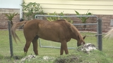 Photos: Complaint alleges horses at Horse… - (6/7)