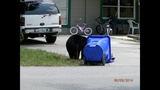 Photos: Tavares nuisance bear - (6/24)