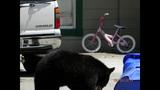 Photos: Tavares nuisance bear - (9/24)