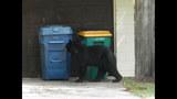 Photos: Tavares nuisance bear - (12/24)