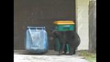 Photos: Tavares nuisance bear - (18/24)