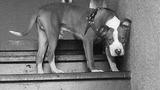 Dog eaten by gator in Orlando_6009817
