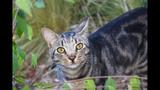 Feral cat_6573634