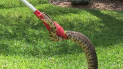 Experts say snakes are on the move, especially in Seminole County.