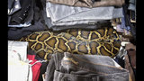 8-foot python found in Homestead flea market_8210147