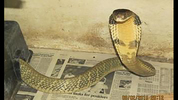 Florida Fish and Wildlife officials are searching for an 8-foot-long king cobra snake that escaped in Orlando.