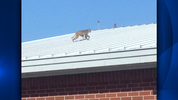 A monkey was spotted on top of a school in Lake County.