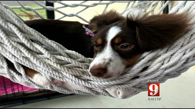 Action 9 investigates Florida pet lemon law   WFTV