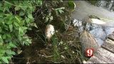 Dying fish in Longwood lake have residents worried about the cause