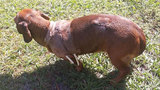 Eustis homeowner says pet dog saved her and son from bear attack