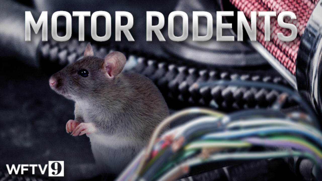 motor rodents web image_1462565449210_4270708_ver1.0_1280_720 action 9 investigates how rodents are causing thousands in car  at arjmand.co