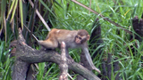 The history of rhesus macaques in Marion County