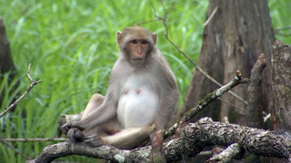9 Investigates dangers associated with roaming monkeys in Central Florida