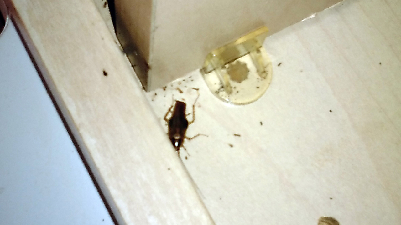 Bon Photos: Roaches, Bedbugs Reported At Orange County Apartments   (1/8)