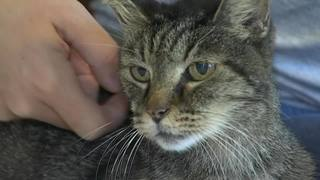 Florida woman reunited with cat 8 years after he went missing