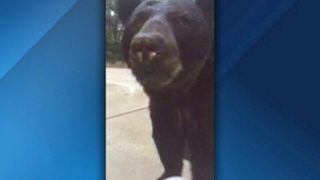 Florida woman records close bear encounter, leads to warning from state agency
