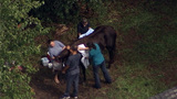 Horse rescued from septic tank in Flagler County