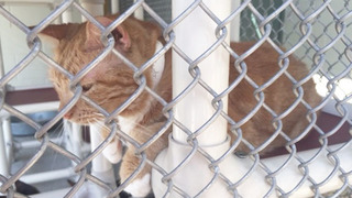 Lake County ready to take over animal shelter after sheriff