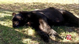 Search underway for bear killer in Lake County
