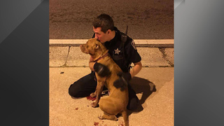 2 Orange County deputies save pit bulls left on road