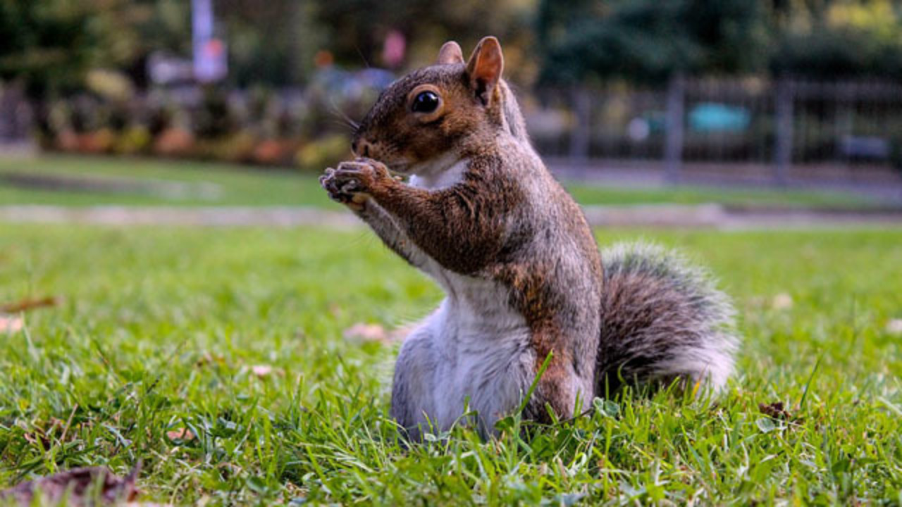 3 injured in squirrel attack at volusia county senior living 3 injured in squirrel attack at volusia county senior living facility wftv geenschuldenfo Choice Image