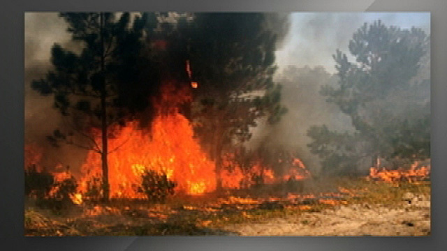Wildfire In Ocala National Forest Prompts Road Closures Wftv