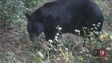 9 Investigates decrease in bear calls to FWC