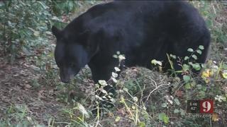 9 Investigates decrease in bear calls to FWC