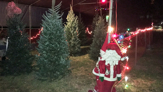 40 trees sold to buy toys for needy children stolen from Bunnell business