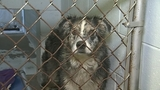 Dogs in Brevard County house fire will be available for adoption