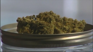Central Florida Spotlight: Medical marijuana producers could be the…