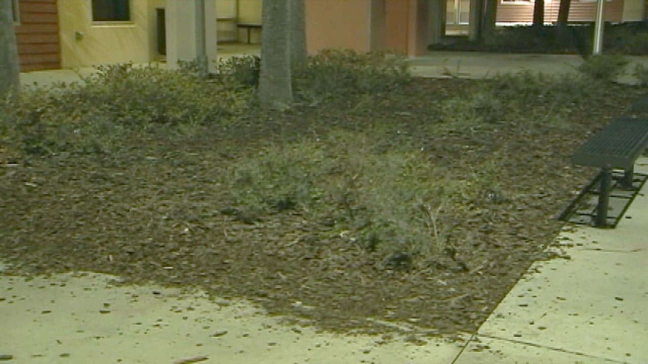 Parent reports courtyard of Winter Garden middle school defaced with ...