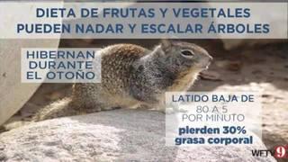 Día de la marmota: sombra o no, va con la tendencia