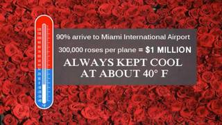 Roses are red, chocolate is sweet - and climate change puts them in the hot seat