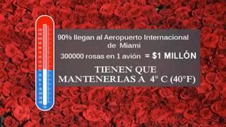 Las rosas, los chocolates y el cambio climático
