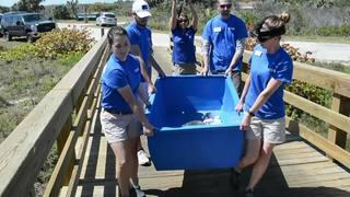 Two rescued loggerhead turtles return to New Smyrna