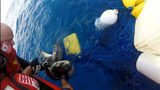 Photos: Coast Guard rescued sea turtles - (4/4)