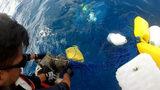 Photos: Coast Guard rescued sea turtles - (2/4)